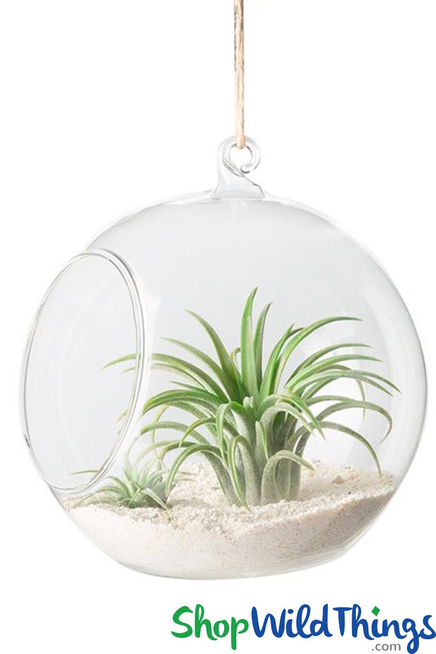 Hanging Or Tabletop Globe 6 Round Terrarium Shopwildthings Com
