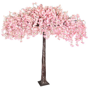 Flowering Japanese Cherry Tree  8'x8' - Huge Double Canopy Extra Full Flowers - Blush Pink