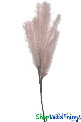 Blush Pink Pampas Grass Bohemian Florals and Home Decorations