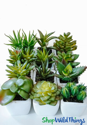 Artificial Succulents in Pots, Assorted Mini Desert Plants by ShopWildThings.com