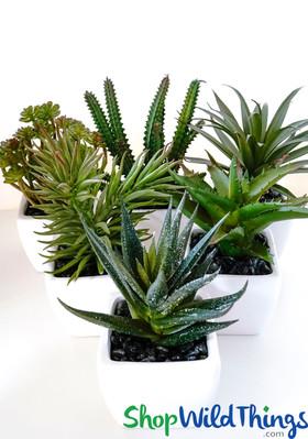 "Succulents in Pots - 6 Assorted Faux Plants - 3"" x 6-7"""