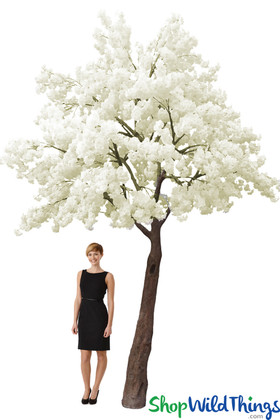 Flowering Dogwood Tree  14' Tall x 13' Wide - Ivory