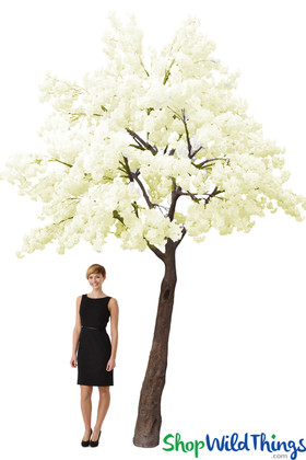 Flowering Dogwood Tree  14' Tall x 13' Wide  Cream