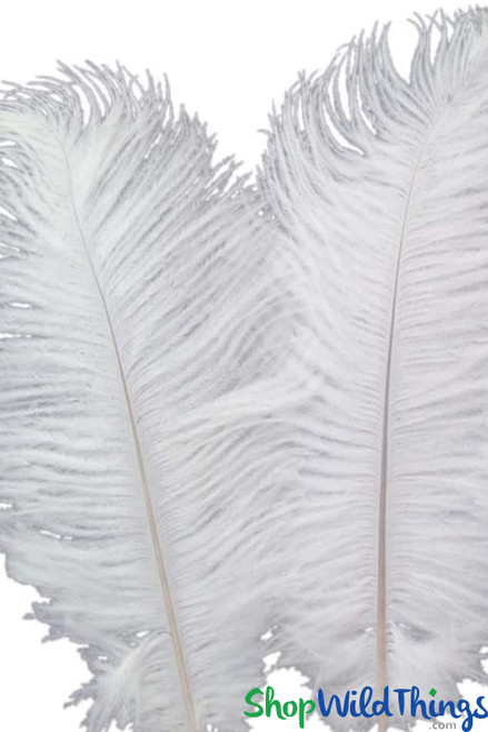 White Ostrich Feathers ShopWildThings.com