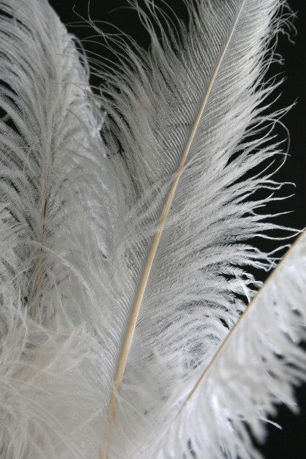 """White Ostrich Feathers 23"""" - 26"""" - SPADS"""