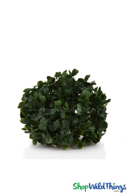 "Kissing Ball Plant Topiary Boxwood  -  Mature Green - 4 1/2"""