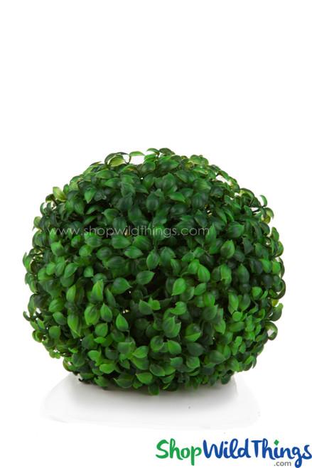 "Kissing Ball Plant Topiary Boxwood - Mature Green - 7"""