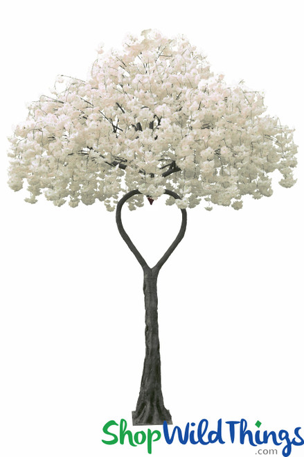 Flowering Dogwood Tree - Ivory - Heart Shaped Trunk - 12 Feet Tall