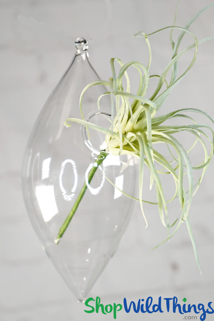 """Diamond Shaped Hanging Vases - Clear Glass Set Of 6 - 7"""" x 3"""""""