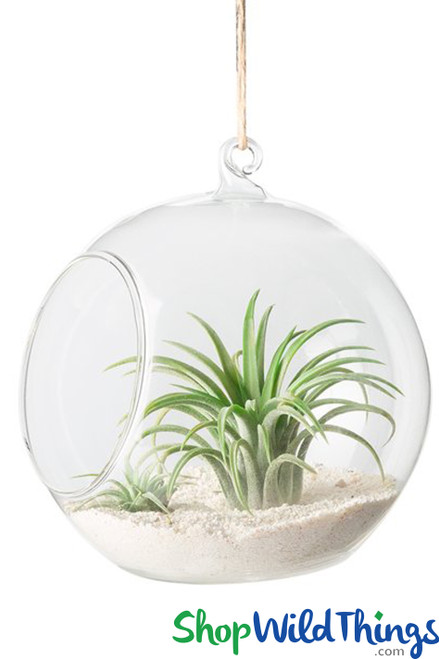 """Hanging or Tabletop Globe 6"""" - Round Terrarium & LED Candle Holder"""
