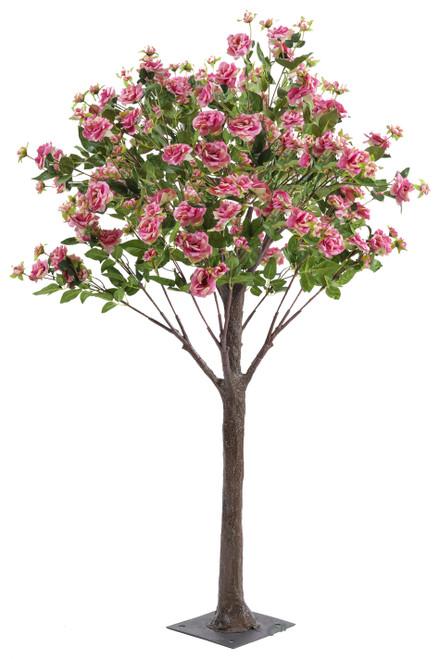 Flowering Rose Tree  5' Tall  Dark Pink