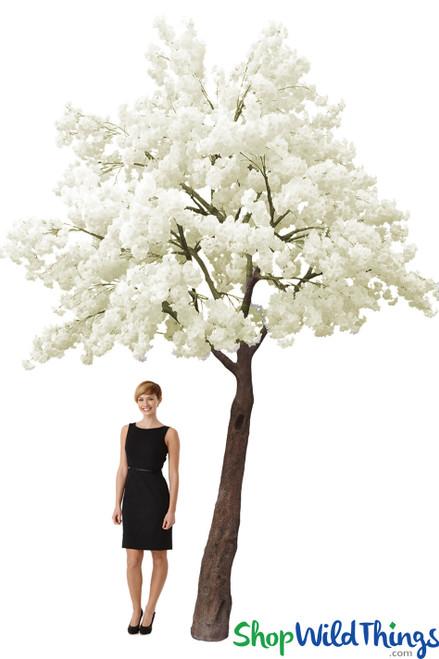 Flowering Dogwood Tree  14' Tall x 13' Wide - Ivory