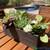 "Artificial Echeveria Green Prince Succulent - 6"""
