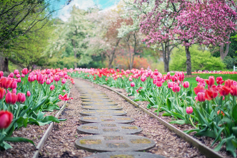 The NZ Flower Calendar from January to December