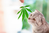 Is CBD Effective for pets? Is it safe?