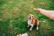 Tips for Using Positive Reinforcement to Reward Your Dog