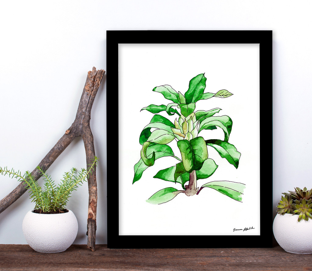 West Virginia Botanicals Watercolor Rhododendron Leaves 2 Fine Art Print. Plain Paper, Laminated, or Framed. Multiple Sizes Available.