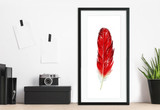 Cardinal Feather Art. West Virginia State Bird. Fine Art Paper, Canvas with Hanger or Framed.