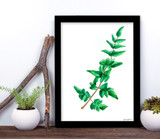 West Virginia Botanicals Watercolor Fern Plant Fine Art Print. Plain Paper, Laminated, or Framed. Multiple Sizes Available.