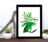 West Virginia Botanicals Watercolor Rhododendron Leaves Fine Art Print. Plain Paper, Laminated, or Framed. Multiple Sizes Available.
