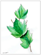 West Virginia Botanicals Watercolor Maple Leaves Set Fine Art Prints. Plain Paper, Laminated, or Framed. Multiple Sizes Available.