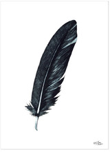 Crow Feather Art Print. Raven Matte Paper, Laminated or Framed. Multiple Sizes