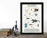 Class Arachnida - Spiders and More - Science Classroom Poster. Fine Art Paper, Laminated, or Framed. Multiple Sizes Available