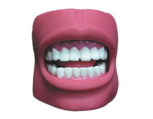 Dental Care Model (with Cheek) AR-K4  ARI