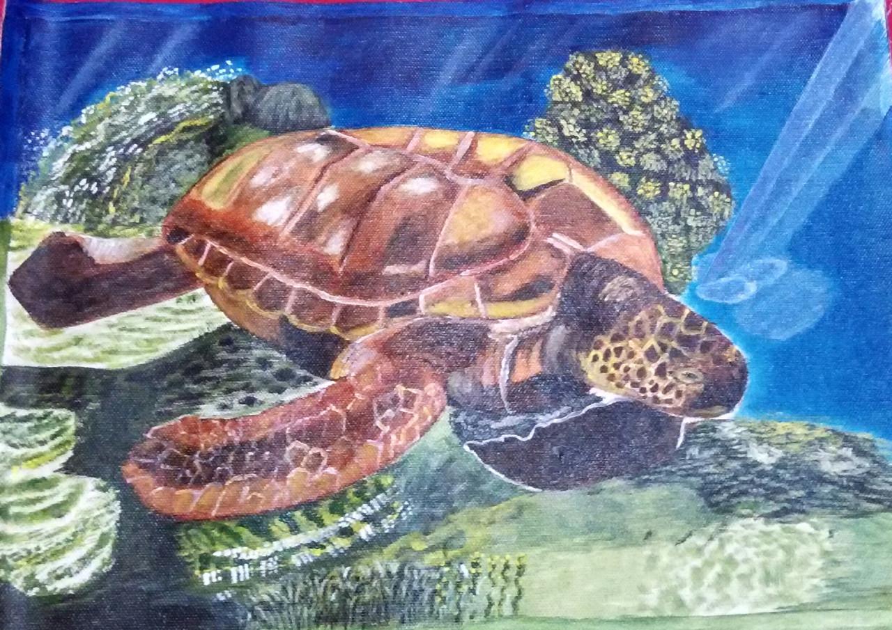 Turtle Paintings Art