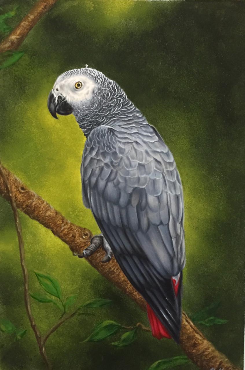 African Grey Parrot (ART_6428_37073) - Handpainted Art Painting - 10in X  14in
