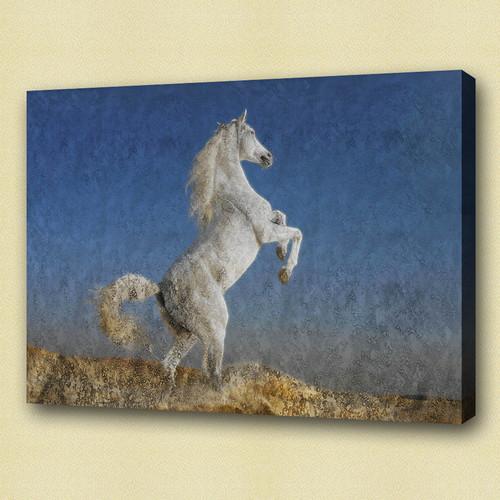 horse, white horse, galloping horse, galloping white horse