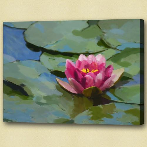 lotus, lotus in pond, pink lotus, leaves