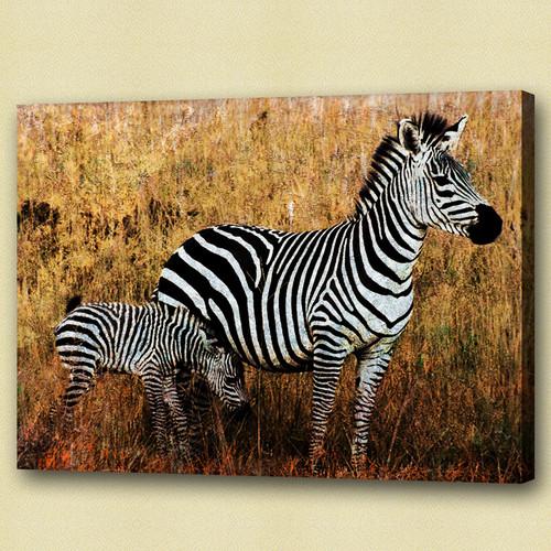 zebra, jungle, two zebra, forest, zebra in forest, standing zebra, wild animal, wild life, mother and child