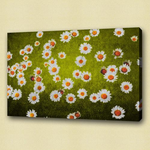 Flower,Florals, flowering plants ,mums or chrysanths,Plantae,White Flowers