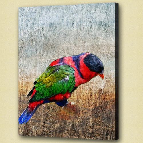 Birds,flying,aves,feathres,Beak