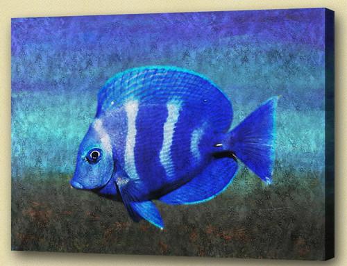 Fish,Aqua Life, Aquatic Craniate,water animal