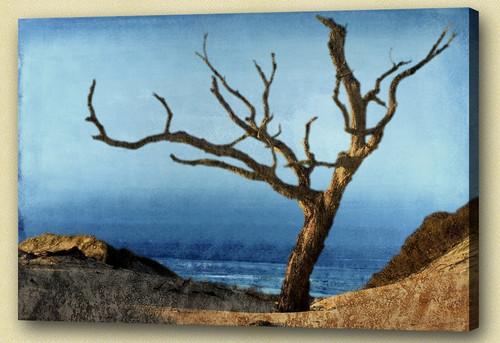 Landscape,Nature,Gold Coast,Scenery,Tree