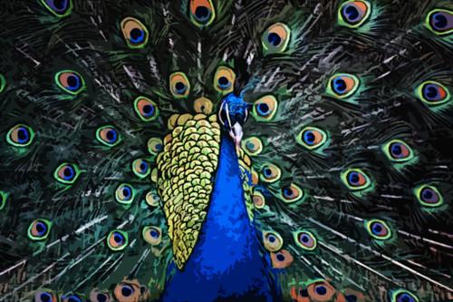 Elegant Peacock,Bird,Indian National Bird,Beautiful Bird