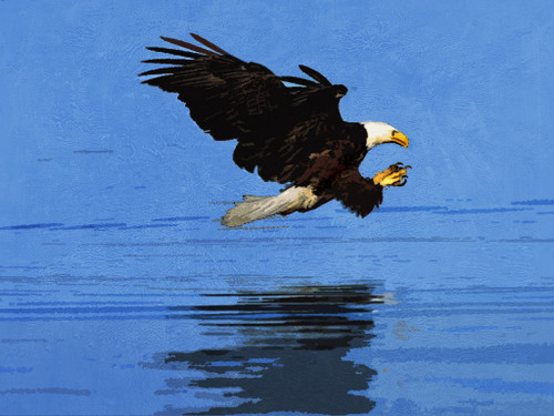 Accipitridae,Eagle,Eagles are large, powerfully built birds of prey