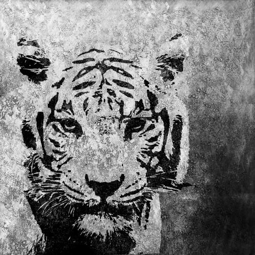 Wild Life,Tiger,wild animal