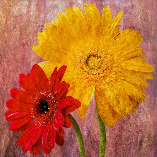 Flower,Floral,Colorful Flowers
