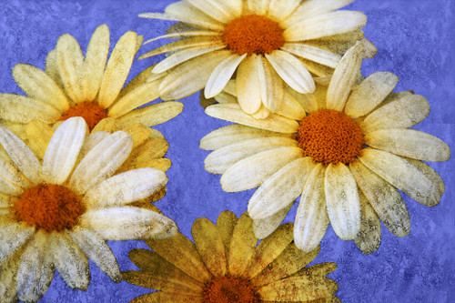 Floral Flowers,Yellow Flowers