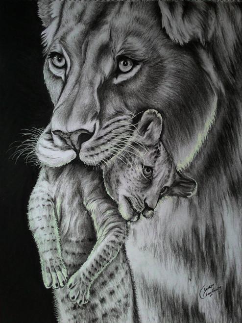 wildlife,lion,charcoal,cub,Care,ART_35_7087,Artist : Saikat Choudhury,Charcoal
