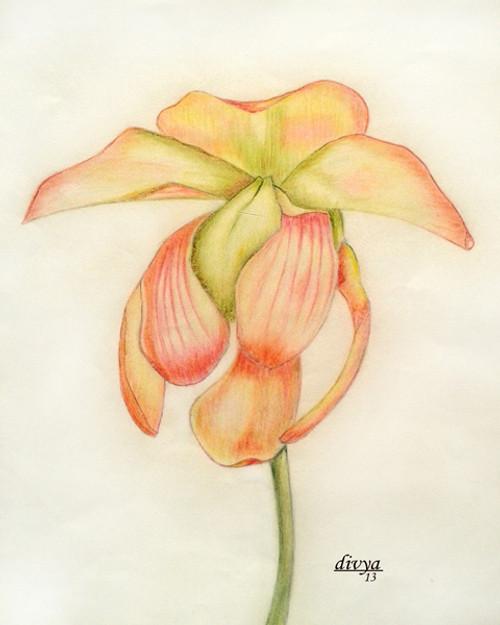 Nature, Flower, Floral, Pink,Flower,ART_1462_11996,Artist : Divya Kakkar,Pencil
