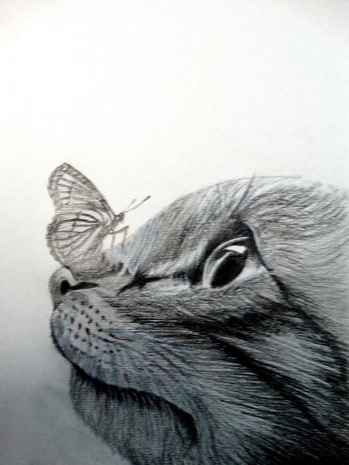 CAT, BUTTERFLY, PLAY,LIFE IS LIKE A BUTTERFLY,ART_1664_14365,Artist : SHAILEYEE  DAS,Pencil