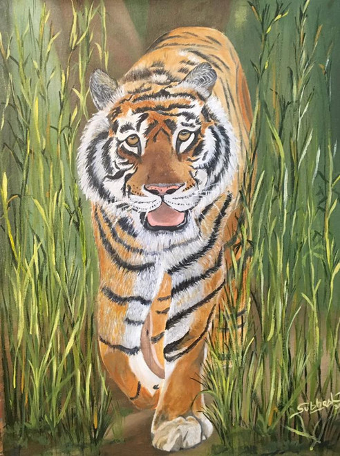 Tiger, wild animal,The Tiger,ART_168_14827,Artist : Subhash Gijare,Oil