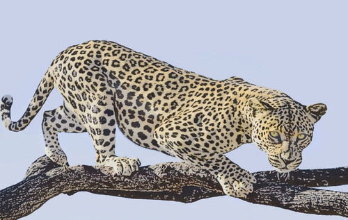 Chitah Paintings,Leopard Paintings,The Leapord,MTO_1550_15075,Artist : Community Artists Group,Mixed Media