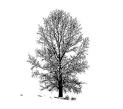 tree paintings,56Dec09,MTO_1550_15271,Artist : Community Artists Group,Mixed Media