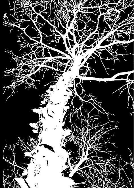 tree paintings,56Dec07,MTO_1550_15269,Artist : Community Artists Group,Mixed Media