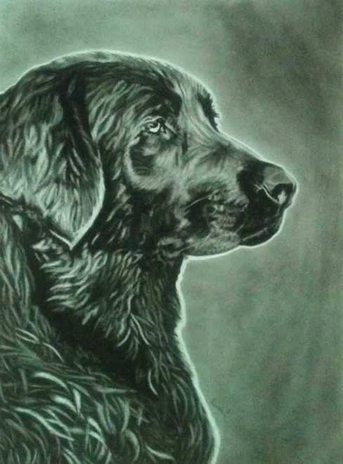 Dog, animal, black and white, charcoal,Partner,ART_1898_15646,Artist : Ravish Choudhary,Charcoal